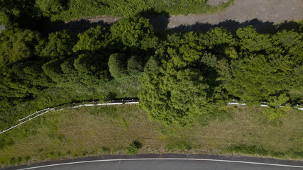 [空撮写真]上空からみおろす木々