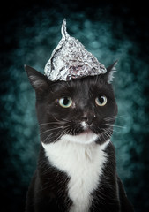 Black and white tuxedo cat  in a tin foil hat