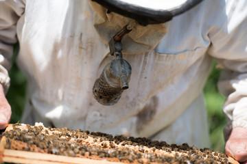 beekeeper with smoke box and honeycomb