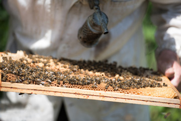 the beekeeper and a honeycomb