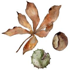 Autumn chestnut leaves. Leaf plant botanical garden floral foliage. Aquarelle leaf for background, texture, wrapper pattern, frame or border.