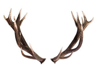 Deer Antlers isolated on white Wall mural