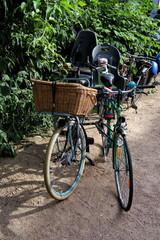 deux vélos côte à côte, de face, au soleil, un avec panier en osier.