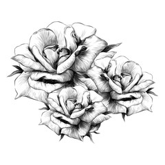 bouquet of rose flower buds on white background, sketch vector graphics monochrome illustration