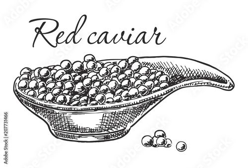 Vector Sketch Red Salmon Roe Caviar Isolated Illustration On A