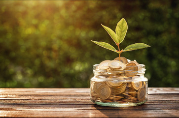 Investment concept, small plant growing out from jar of coins with copy space