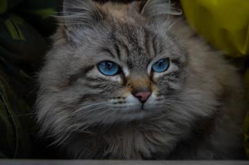 Bottomless cat eyes
