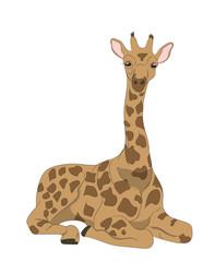 Giraffe sits, vector