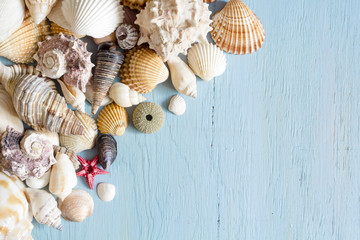 Sea shells on blue wooden background. Copy space. Summer concept