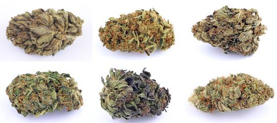 Cannabis e marijuana con alto cbd e basso thc - fiore - droga leggera da fumare - sostanze legali e illegali - erba curativa - ganja  Wall mural