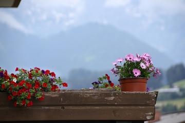Holzbalkon, Berge, Blumen, Austria