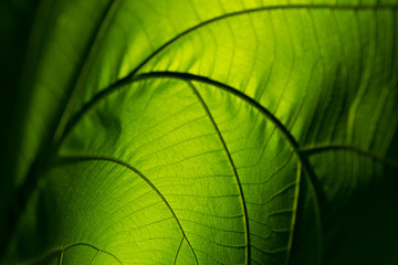 Closeup nature green leaf roll up texture for abstract background
