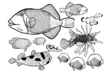 Sea fish white background