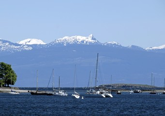 marina with anchored yachts, snow capped mountains in the background, Nanaimo, British Columbia Canada