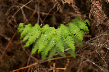 Detail of fresh young fern fronds