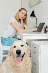 teen student girl doing homework with her golden retriever on foreground