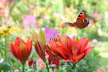 Schmetterling 441