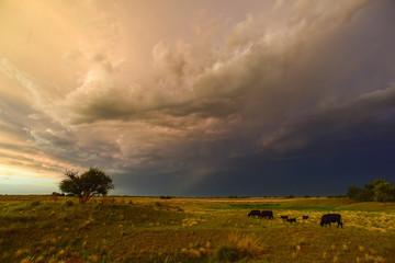 Recess Fitting Khaki Stormy landscape, La pampa, Patagonia, Argentina