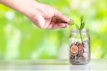 Save money interest Plant Growing In Savings Coins money in the glass saving money with hand putting coins Green Natural background