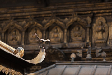 The decorative symbolical bird made of bronze on a peak of the Buddhist Golden temple in the capital of Nepal - Kathmandu. Against the background of are visible Buddhas and bodkhisattvas.