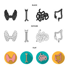 Thyroid gland, spine, small intestine, large intestine. Human organs set collection icons in black,flat,outline style vector symbol stock illustration web.