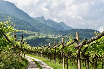 Südtirol - Weinberg zwischen Tramin und Kaltern