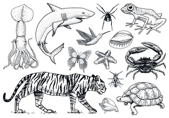 Set of animals. Reptile and amphibian, mammal and insect, wild turtle. Engraved hand drawn. Old vintage sketch. Bug tiger shellfish butterfly fish squid spider. Classification of creatures and biology