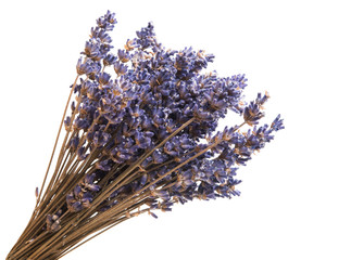 dry lavender isolated