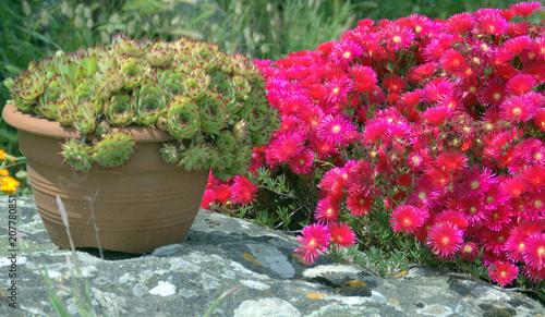 pot de succulentes,et fleurs ,décoration de jardin\