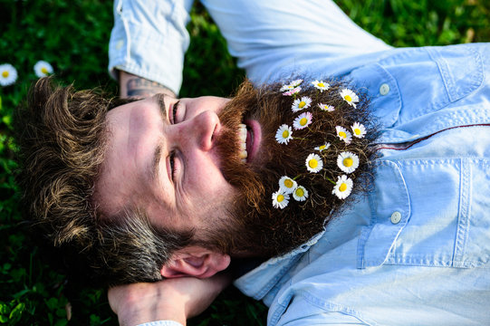 Man looks nicely with daisy or chamomile flowers in beard, close up. Hipster on happy face lays on grass. Masculinity concept. Macho with beard and mustache enjoys spring, green meadow background.