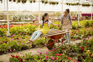 Young  playful florist enjoying work while one of them riding in the cart in the greenhouse