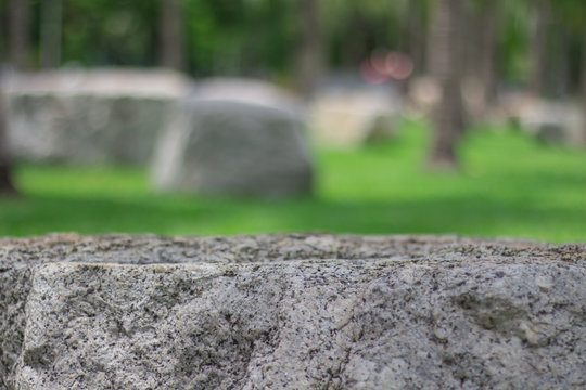 Beautiful public park with green grass field and stone. Text space.