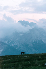 Horse standing in front of the dolomite mountains during blue hour