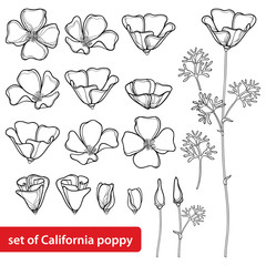 Vector set with outline California poppy flower or California sunlight or Eschscholzia, leaf, bud and flower in black isolated on white background. Contour poppy for summer design and coloring book.