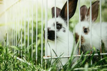 Junge Hasen in Freiluftkäfig, draußen