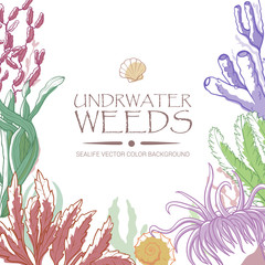 Underwater weeds color background