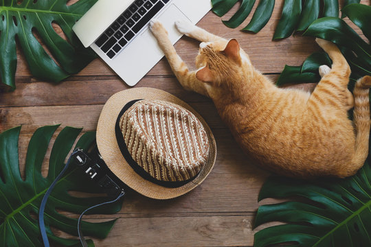 Ginger cat acts as human working on laptop computer on rustic wood grunge background with tropical leaves Monstera, hat and retro style camera, freelance work from home and digital nomad concepts.