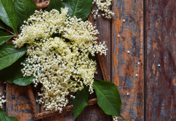 Elderflower blossom flower in wooden background. Edible elderberry flowers add flavour and aroma to drink and dessert. Sambucus nigra. Copy space
