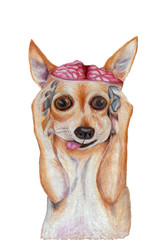Dog with open brain isolated. Hand drawn by pencil illustration of shocked dog. Crazy puppy. Brainwashing concept.