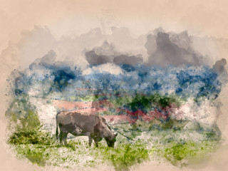 Watercolour painting of a Black cow grazing in a field in Pontypool, South Wales