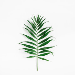 Tropical palm leaf on white background. Summer concept. Flat lay, top view, square