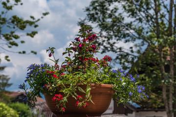 Blumentopf mit roten Fuchsien und