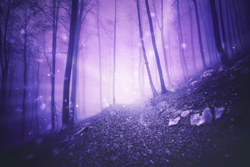 Fotobehang Snoeien Fantasy pink colored foggy forest landscape with magic firefly lights background.