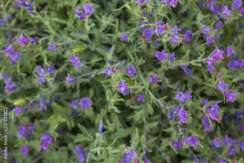 Piccoli Fiori Viola.Piccoli Fiori Viola Stock Photo And Royalty Free Images On