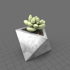 Cactus in concrete planter