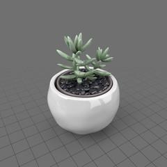 Succulent in round planter