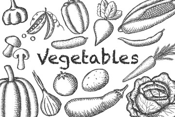 Vector image of painted vegetables on a light background. Graphic illustration.