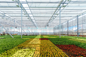 Modern hydroponic greenhouse with climate control system for cultivation of flowers and ornamental plants for gardening