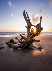 Big Talbot Island's beautiful boneyard beach in Jacksonville, FL