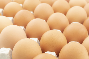 row of chicken eggs in paper tray